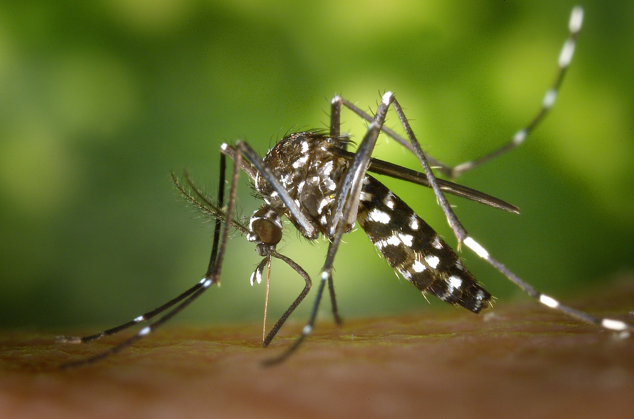 Dengue and what is it?