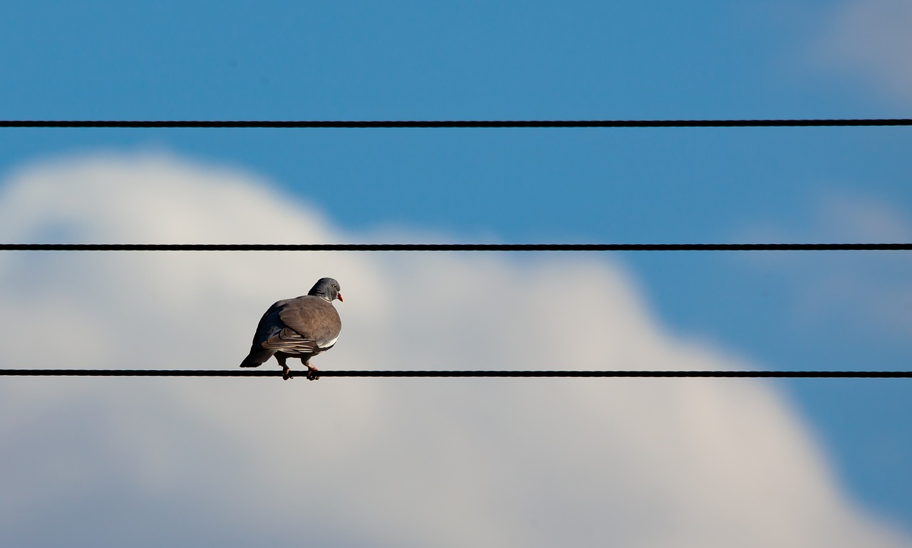 Why do birds not get electrocuted when sitting on a power cable?